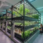 save-space-hydroponic-indoor-growing-urban-farm-small-1100x797